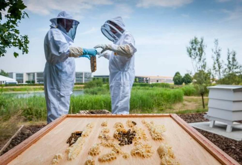 Rolls-Royce Goodwood Apiary honey-making project